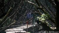 Menyusuri Hutan Penjaga Pantai Utara Jakarta