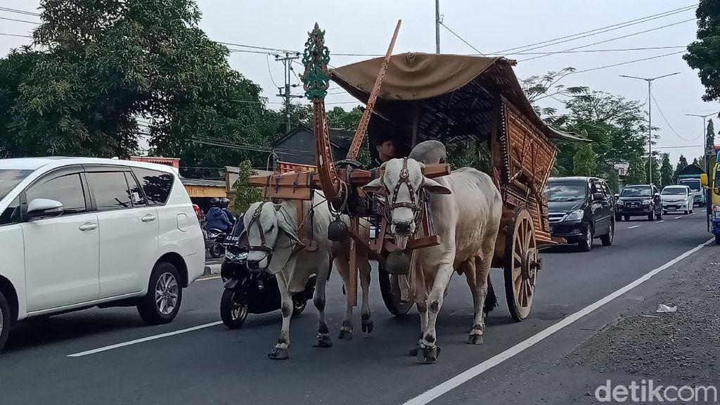Gerobak Sapi di Tengah Deru Mesin Kendaraan Jalan Yogya-Solo