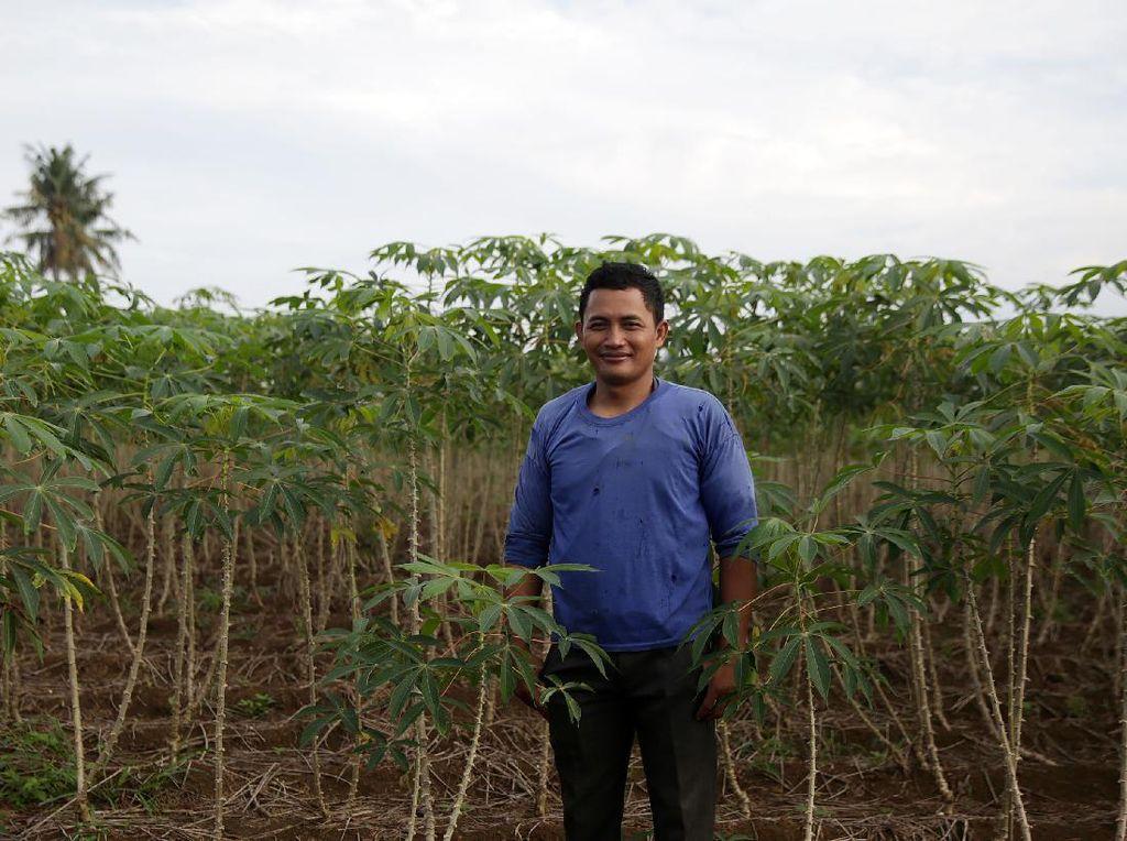 Petani Lampung Raup Omzet Rp 150 Juta per Tahun dari Tanam Singkong