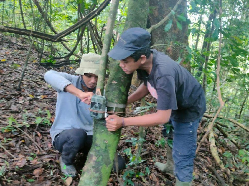 Begini Camera Trap Dipasang Pantau Macan Tutul Jawa di TN Meru Betiri
