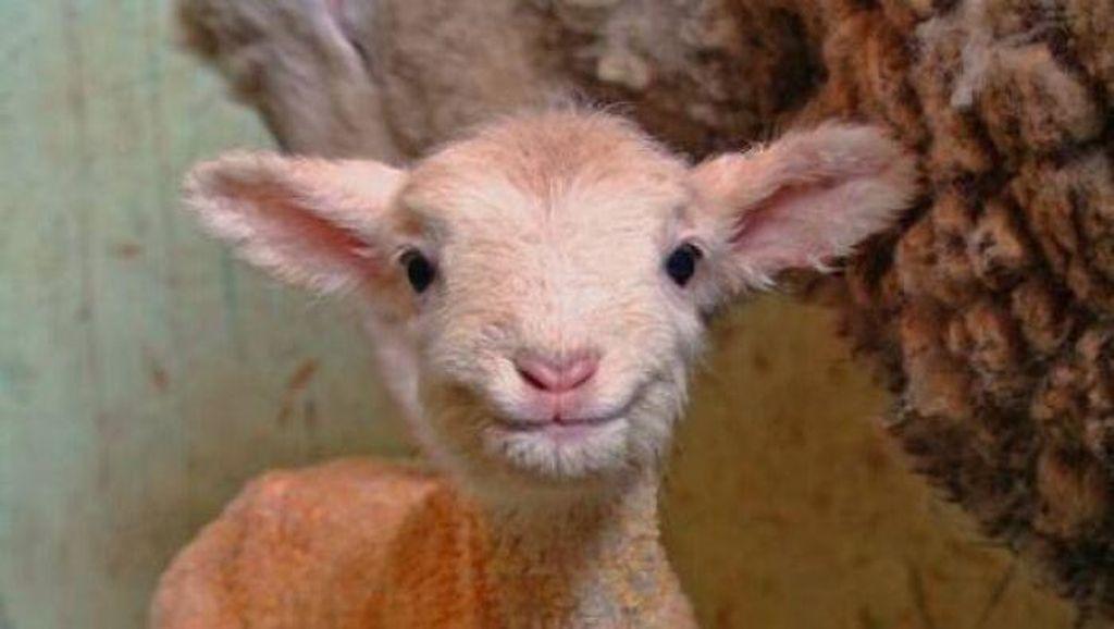 Tahan Senyum! 15 Foto Bayi Hewan yang Menggemaskan