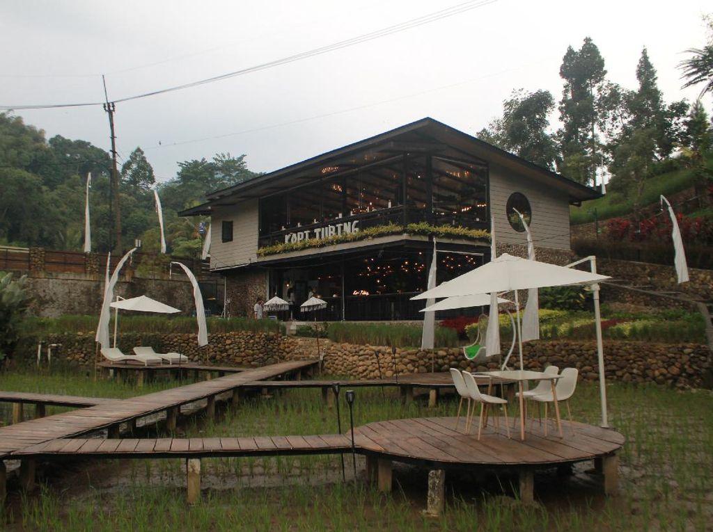 Coffee Shop Nuansa Pedesaan hingga Burung Paling Mematikan di Dunia