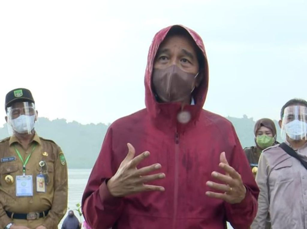 Diguyur Hujan, Jokowi Basah-basahan Tanam Mangrove di Pantai Kepri