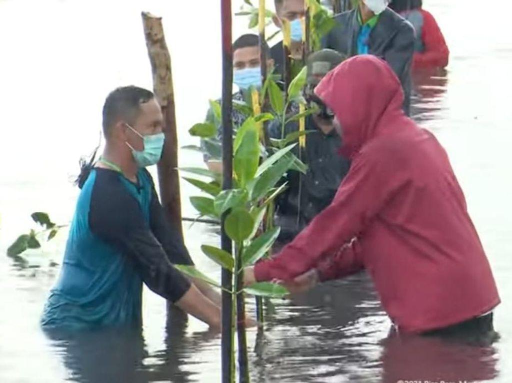 Jokowi Hujan-hujanan dan Nyebur ke Laut saat Tanam Mangrove di Batam