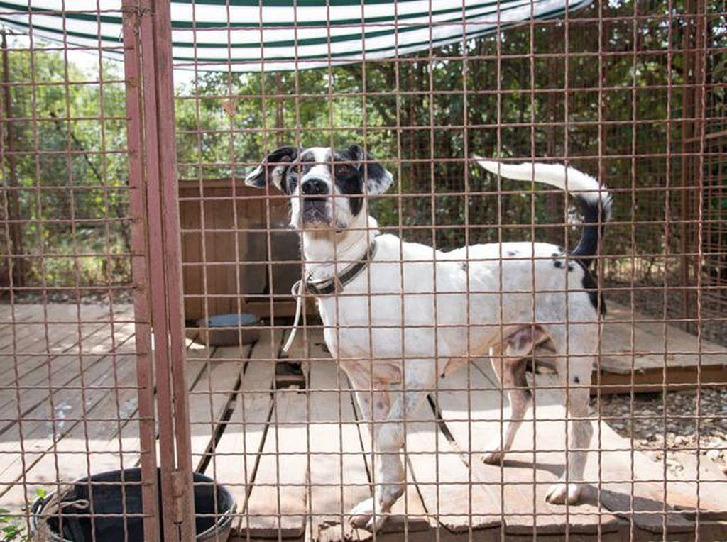 Anjing Dilarang di Pulau Banyak Aceh Sejak 2019, Dasarnya Surat Gubernur