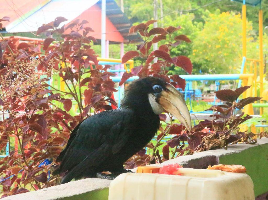 Bentang Alamnya Sangat Cantik, Burung Rangkongnya Jinak dan Jahil