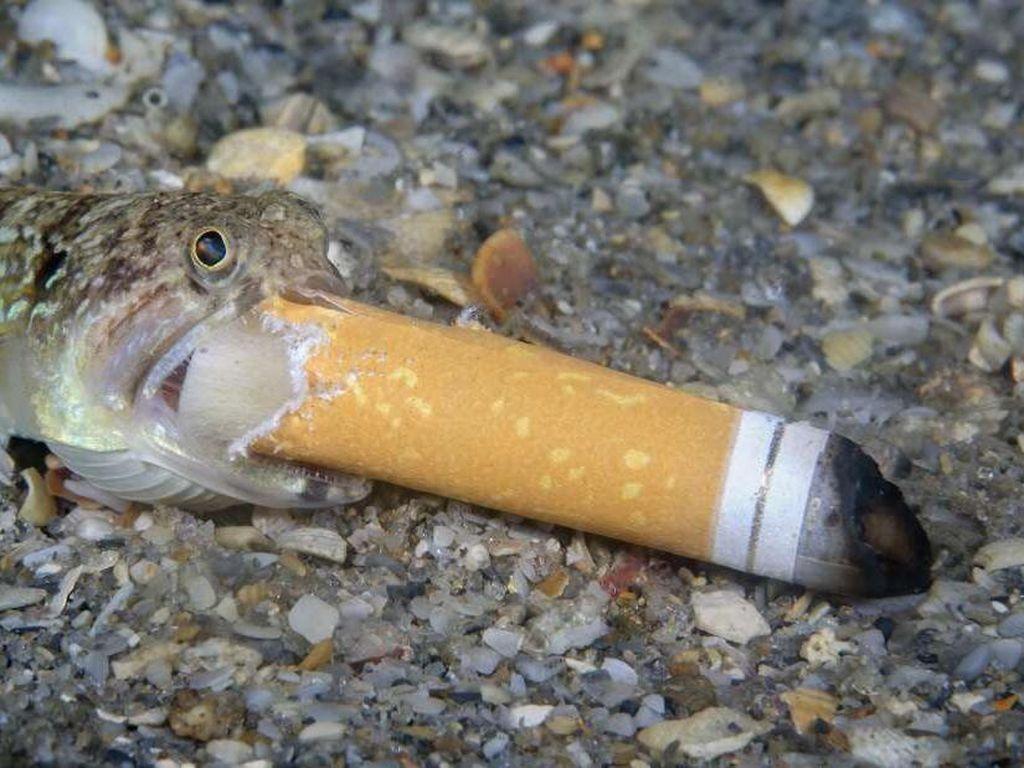 Potret Sedih Ikan Merokok Jawara Kontes Fotografi Dunia