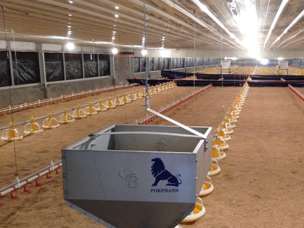 IPB Berencana Kembangkan Teknologi IoT pada Peternakan Ayam Broiler