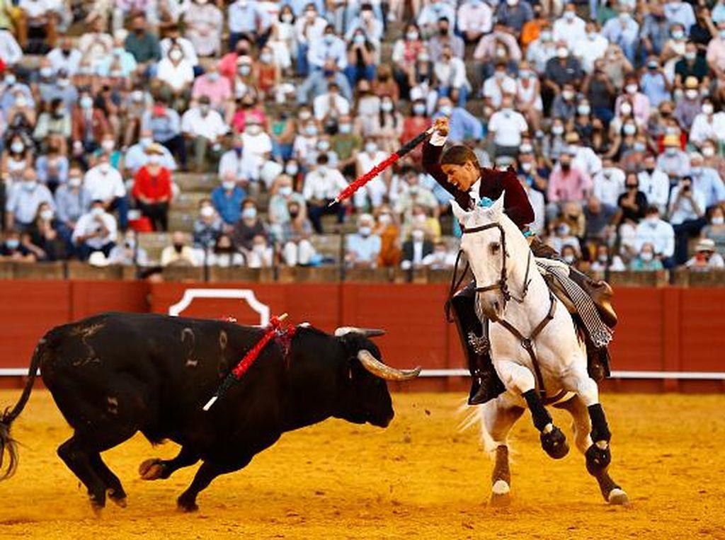 Laga Adu Banteng Kembali Beraksi di Spanyol
