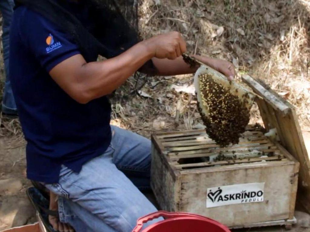 Dorong Produktivitas Kelompok Tani Hutan