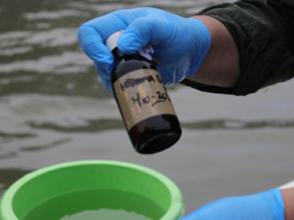 Kata Peneliti Soal Sumber Pencemaran Paracetamol di Teluk Jakarta