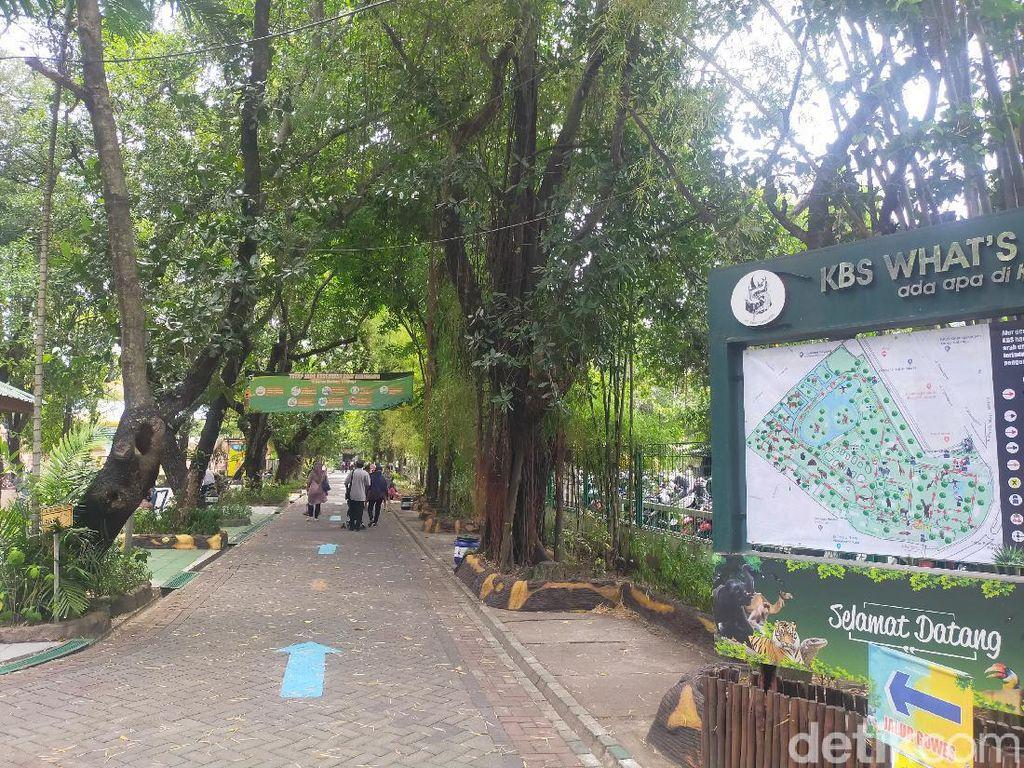 Kata Pengunjung di Hari Pertama Kebun Binatang Surabaya Dibuka Kembali