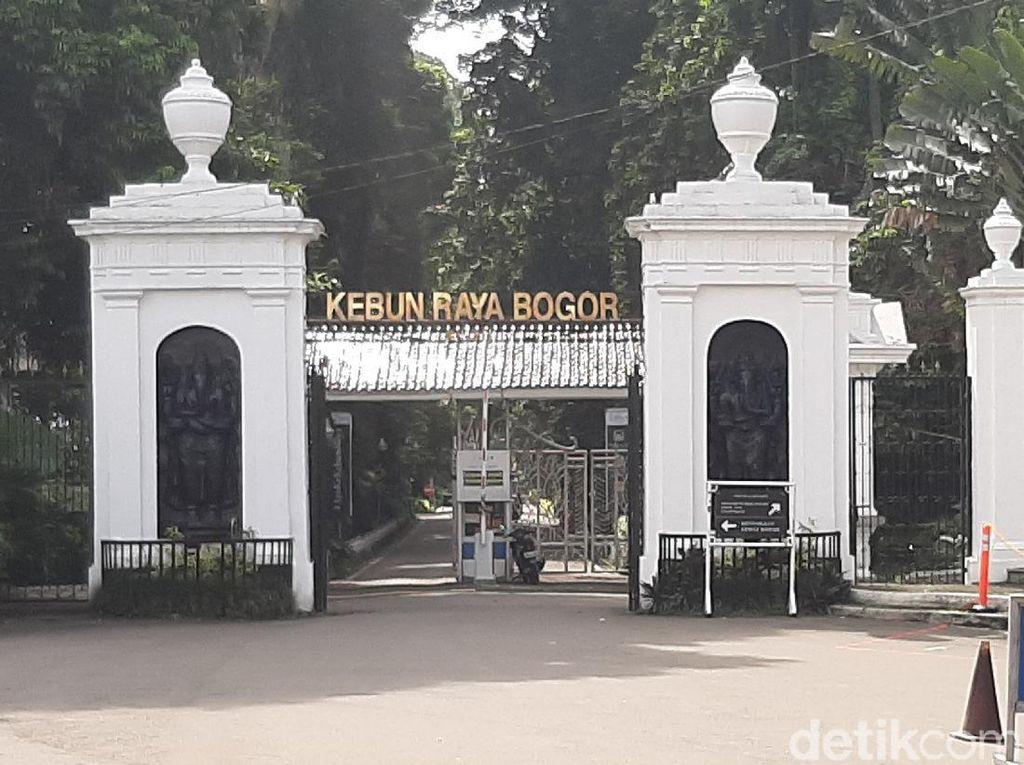 Kebun Raya Bogor, dari Zaman Pajajaran Sampai Ingin Diajukan Status UNESCO