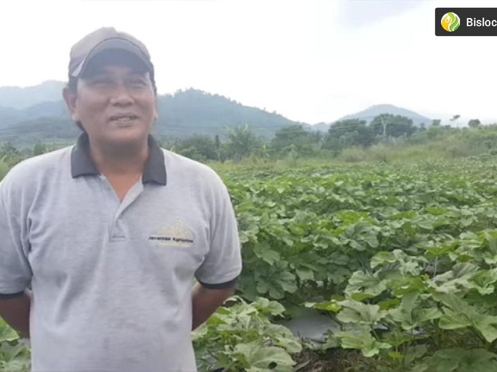 Keunikan RM Padang Rinai Pambasuah Luko hingga Kenken Wiro Sableng Jadi Petani