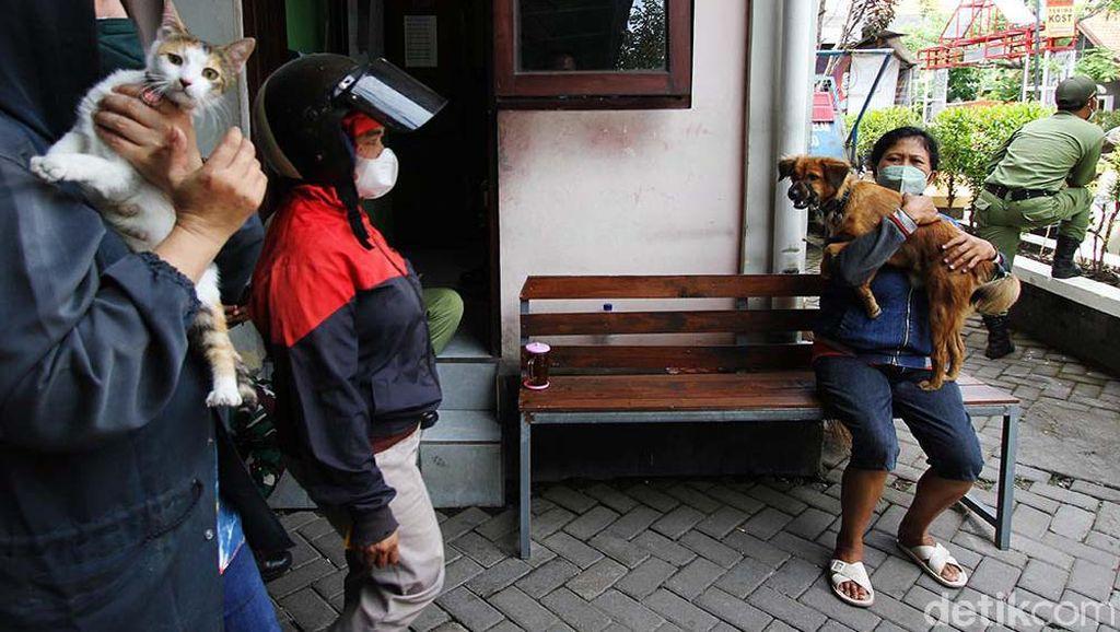 Keriuhan Anjing dan Kucing Saat Disuntik Vaksin Rabies