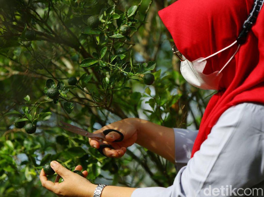 Cerita Inspiratif di Balik Sirup Jeruk Kunci Khas Bangka Belitung