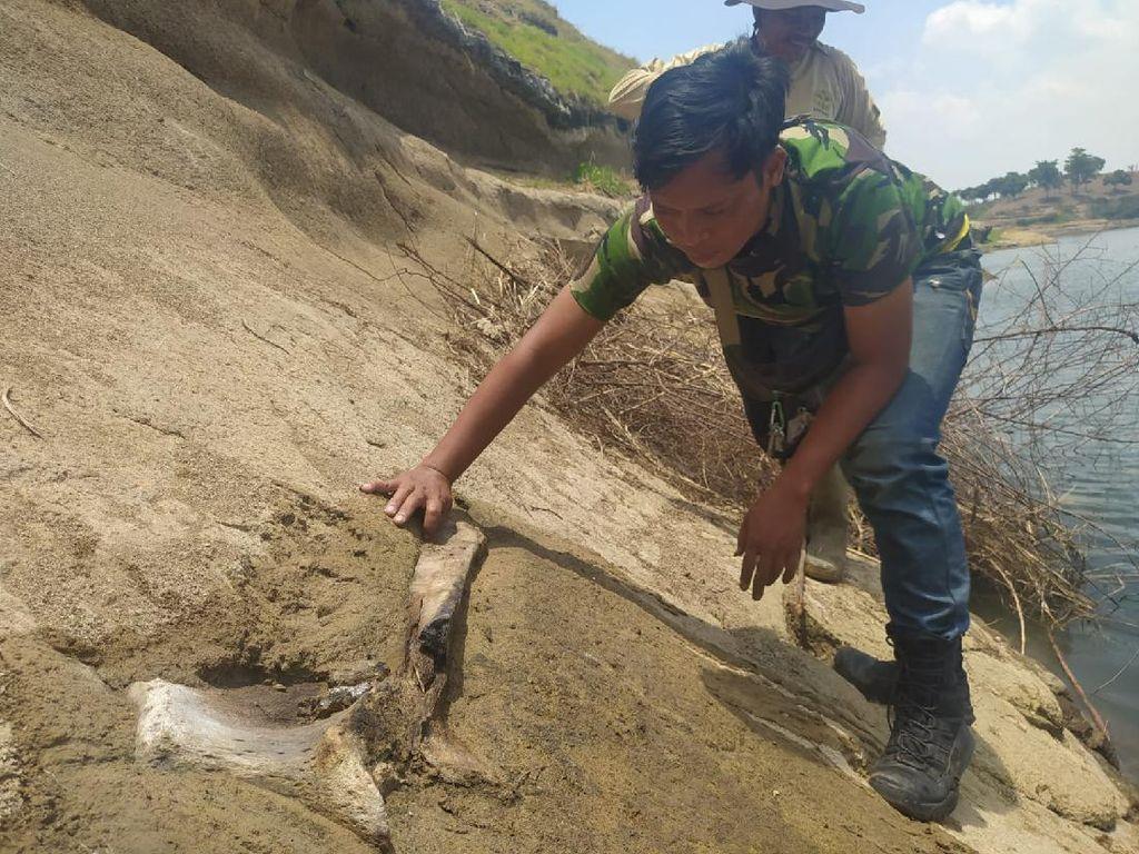 Nelayan di Waduk Saguling Temukan Benda Diduga Fosil Hewan Purba