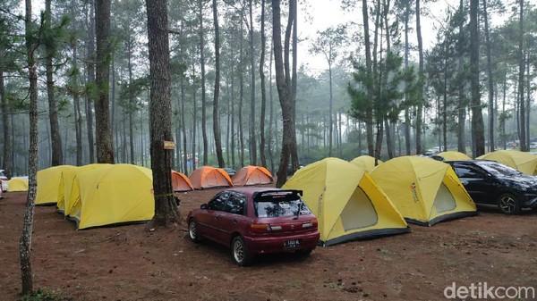 Jika Anda ingin berkemah namun tak mau ribet, nampaknya camping ground Cozy Land bisa jadi pilihan. Cozy Land menawarkan wisata alam dengan suasana sejuk deretan pohon pinus. (Whisnu Pradana/detikTravel)