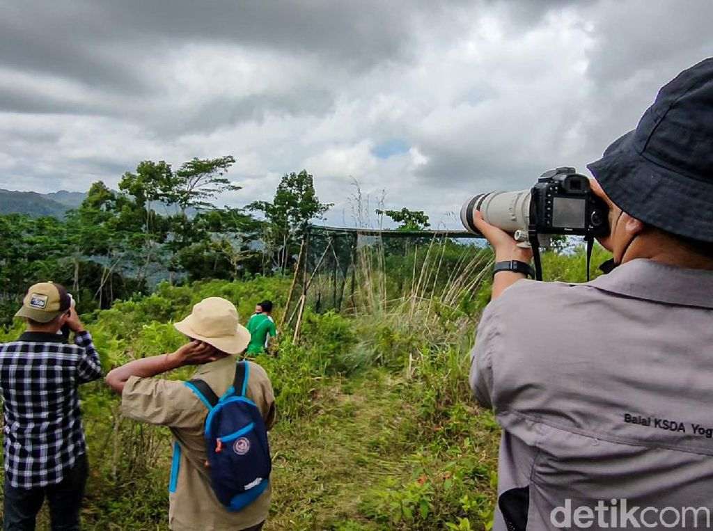 Kisah Desa Ramah Burung di Kulon Progo: Dulu Memburu, Kini Melindungi