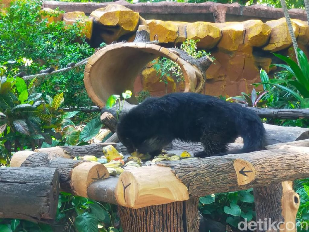 Tiga Satwa Lahir di Kebun Binatang Surabaya dalam Dua Bulan