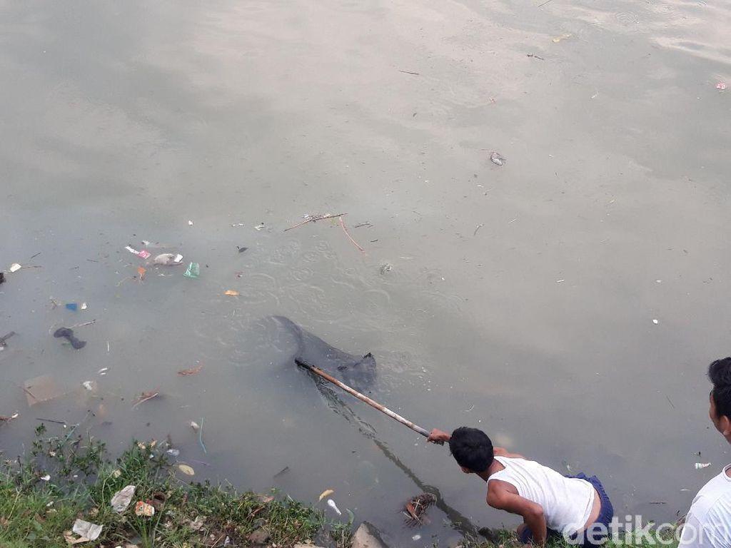 Kali Cisadane Diduga Tercemar Limbah, Warga Berburu Ikan Mabuk