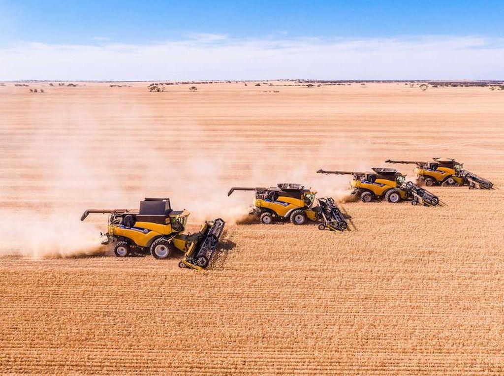 Kekurangan Pekerja di Australia, PNS Ditawari Cuti Berbayar untuk Bantu di Musim Panen