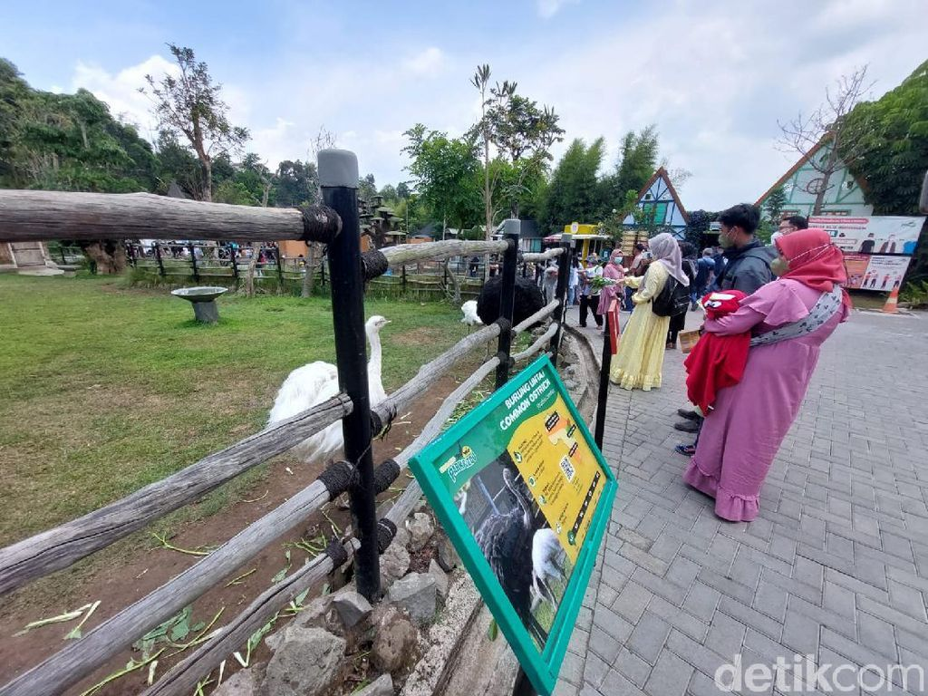 Lembang Park and Zoo Sudah Ramai Wisatawan Lho