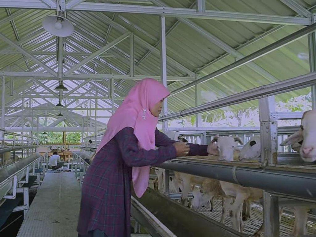 Berhenti Jadi Dosen, Wanita Ini Pilih Ternak Domba dengan Teknologi Canggih