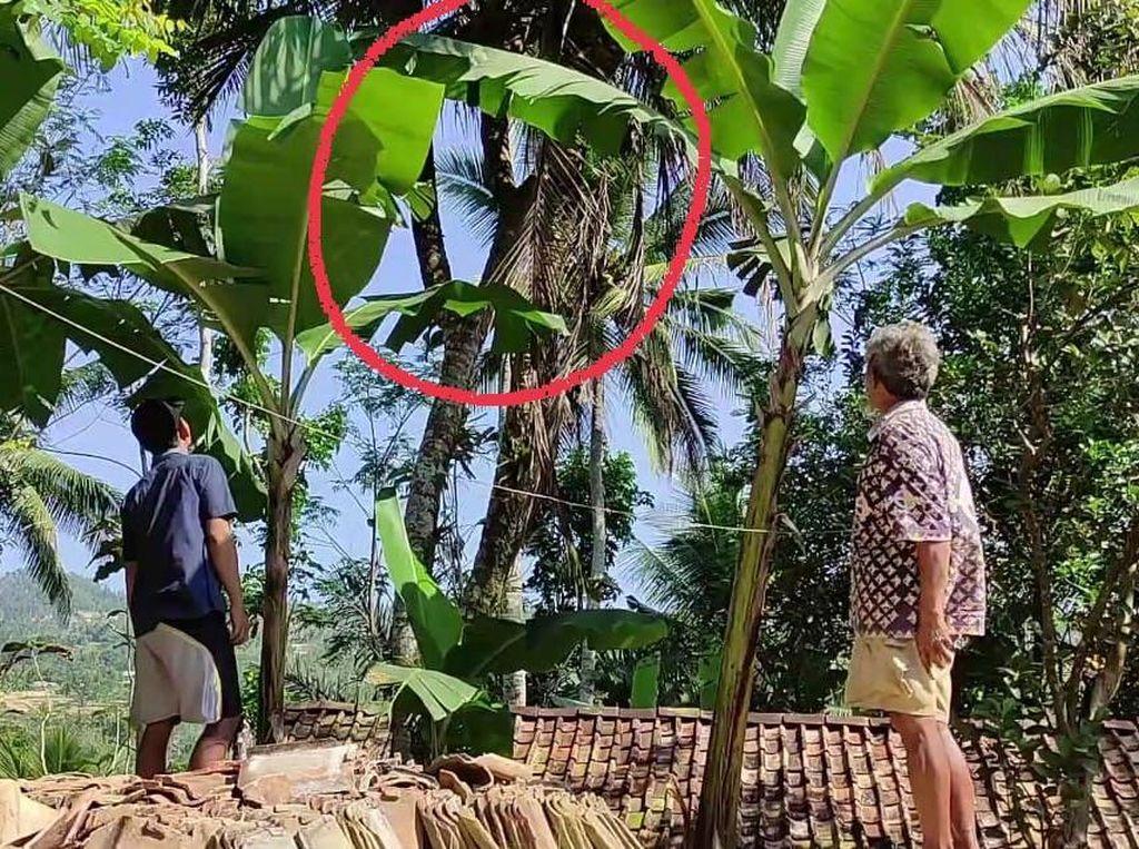 Pohon Kelapa Bercabang 8 hingga Secuil Kisah Wali di Pacitan