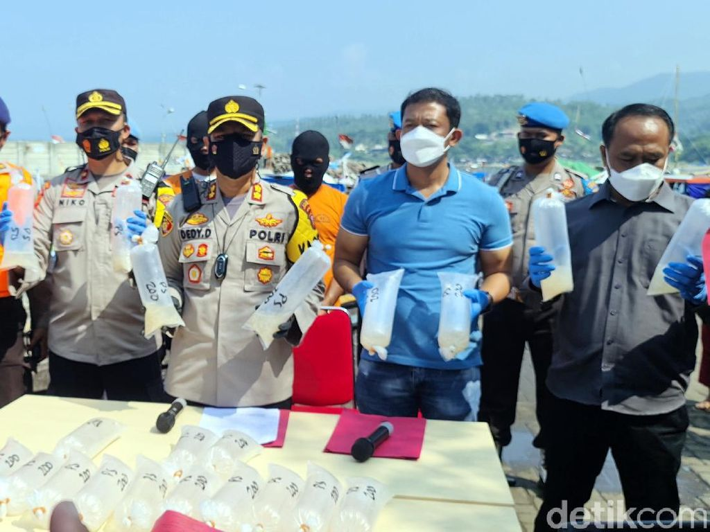 Polisi Gagalkan Penyelundupan Ribuan Benur untuk Ekspor di Sukabumi