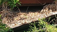 Rumah Pesugihan di Sidoarjo Jadikan Anak Sebagai Tumbal-Dikubur Dalam Rumah