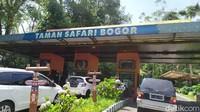 Wisata ke Taman Safari Bogor, Ini Aturan Barunya