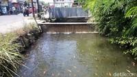 Warga Karanganyar Raup Cuan dari Sulap Selokan Jadi Kolam Ikan