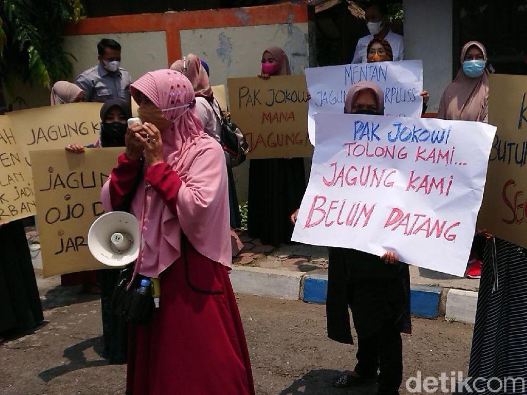 Peternak Ayam Petelur Blitar-Tulungagung Demo Tagih Janji Penyediaan Jagung