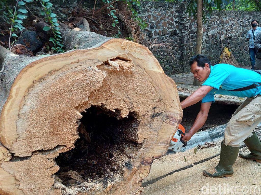 Jejak Sesajen di Pohon Raksasa Tumbang di Jalan Tamansari Bandung