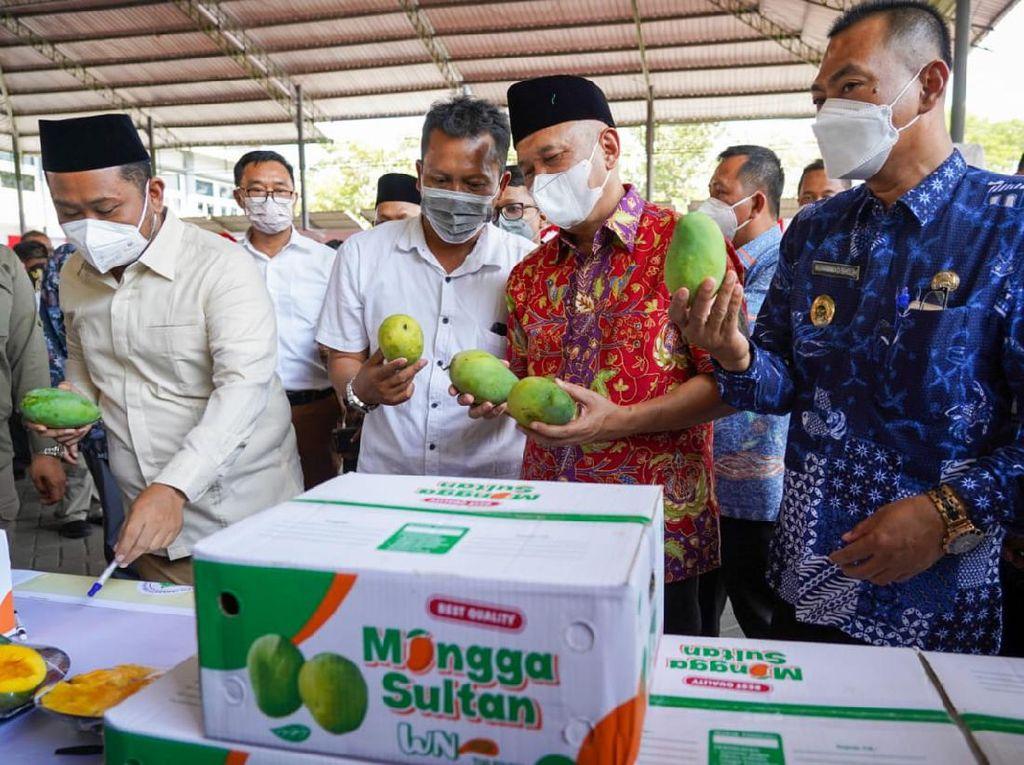 1 Ton Mangga Asal Petani Gresik Diekspor ke Singapura
