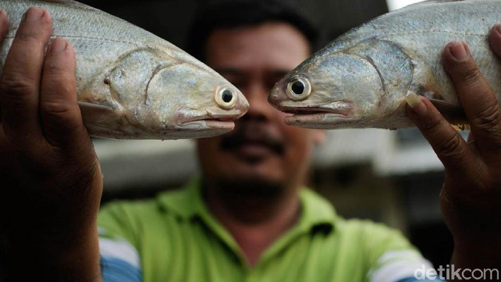 Berburu Aneka Hasil Laut Segar di Pasar Tawang Kendal