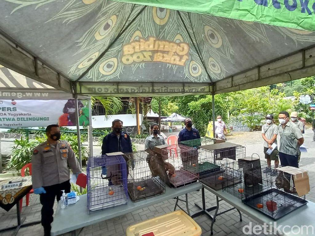 Jual Satwa Dilindungi, Pemuda Semarang Dibekuk Polisi Cyber