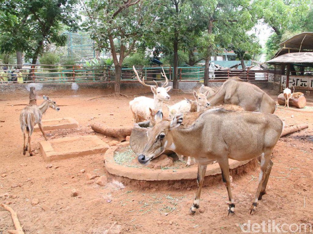 Pandemi Bikin Satwa Maharani Zoo dan Goa Lamongan Bertambah Banyak