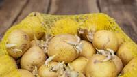 7 Makanan Ini Bisa Bahayakan Kesehatan Jika Tak Diolah dengan Tepat