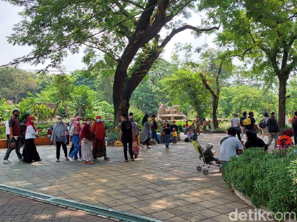 Tiga Minggu Buka, Kebun Binatang Surabaya Dikunjungi 37.838 Orang