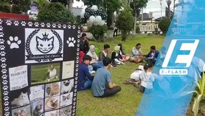Peduli Kucing, Komunitas Ini Bagi-Bagi Makanan Gratis