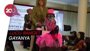 Saat Hewan Peliharaan Bergaya di New York Fashion Show