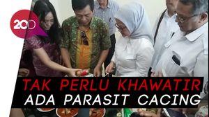 BPOM Jamin Ikan Makarel Kaleng Aman Dikonsumsi!