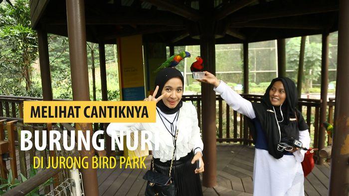 Mengagumi kecantikan Burung Nuri di Jurong Bird Park