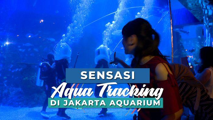 Sensasi Aqua Tracking di Jakarta Aquarium