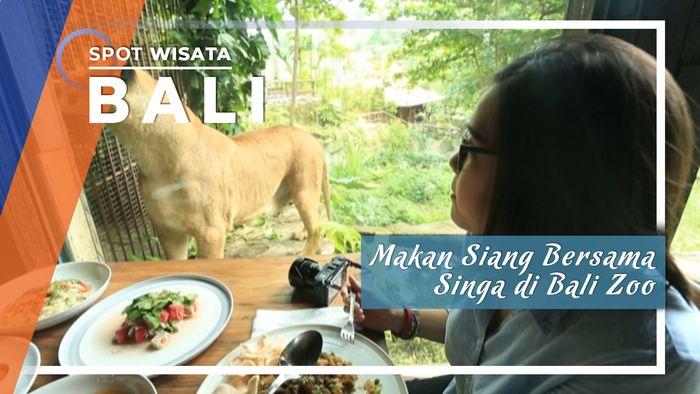 Menikmati Makan Siang Bersama Singa Di Bali Zoo, Bali