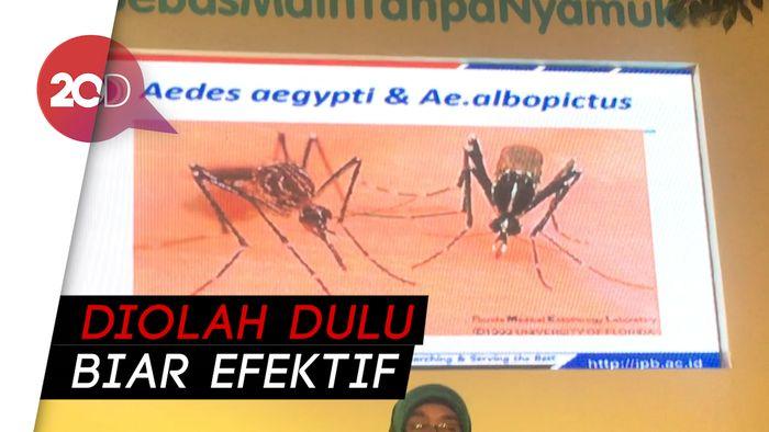Tanaman Alami Ini Bisa Mencegah Gigitan Nyamuk Lho!