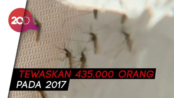 Ilmuwan Manfaatkan Laba-laba Perangi Keganasan Nyamuk Malaria