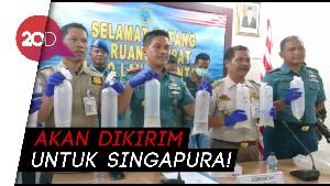 TNI AL Gagalkan Penyelundupan Ratusan Ribu Baby Lobster Rp 17,8 M